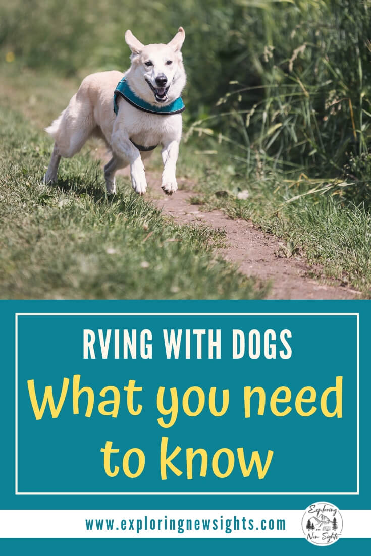 RVing with dogs 2 - RV With Dogs - What to Expect