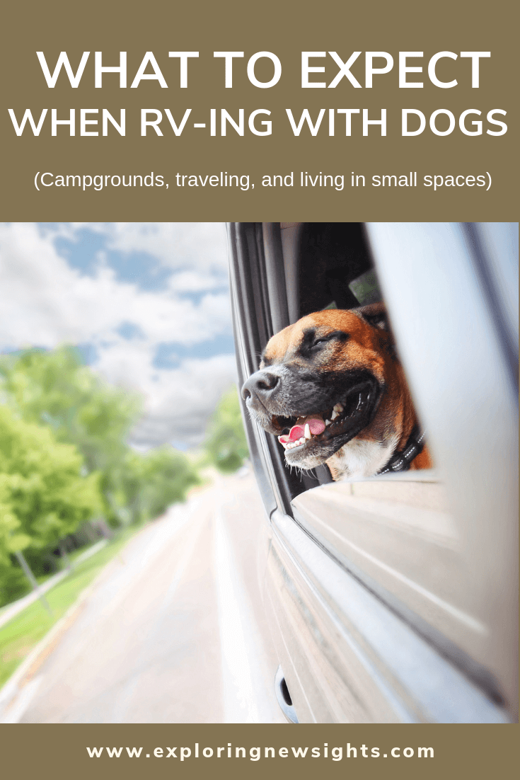 What to expect when RVing with dogs 2 2 - RV With Dogs - What to Expect
