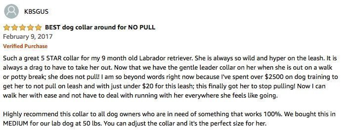 Collar Review - The  Best No Pull Dog Leash Ever Invented