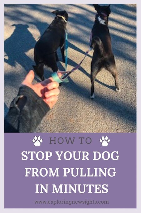 howtostopdogfrompullingpinterest - The  Best No Pull Dog Leash Ever Invented