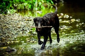 fetch 300x196 - Tips on Making Your Camping Trip Fun with Your Dog!
