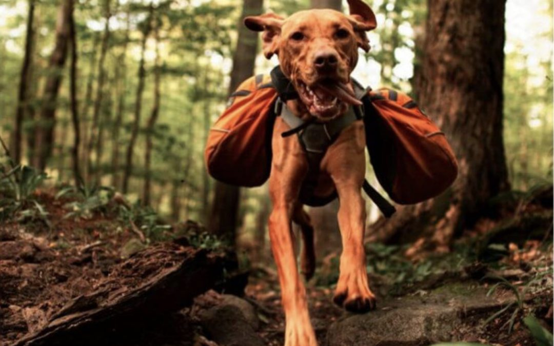 Camping with your Dog | Must-Have Dog Camping Gear for a Safe Trip