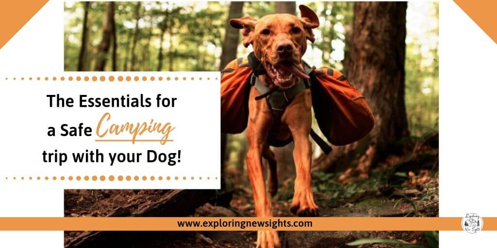 www.exploringnewsights.com 2 - The Essentials for a Safe Camping Trip with your Dog(s)